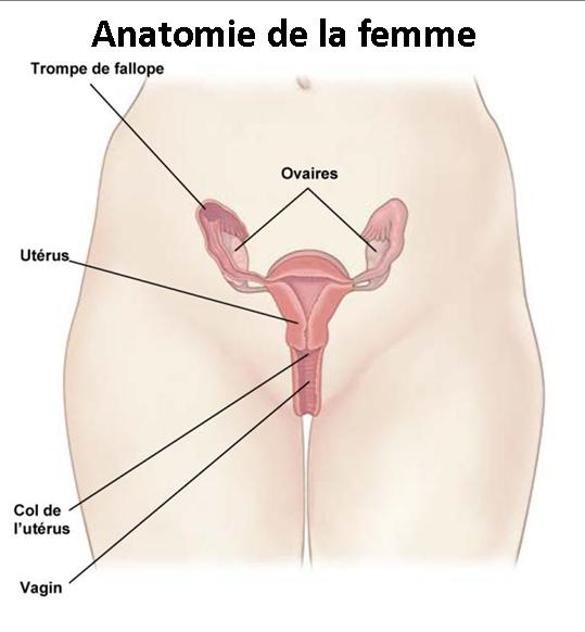 Anatomie femme